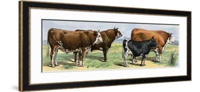 European Beef Cattle and a Dairy Cow--Framed Giclee Print