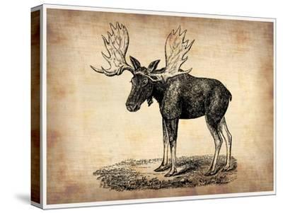 Vintage Moose-NaxArt-Stretched Canvas Print