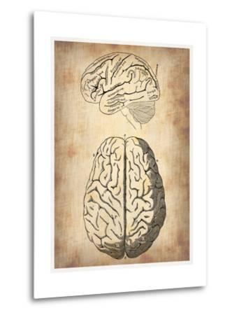 Vintage Brain Anatomy-NaxArt-Metal Print
