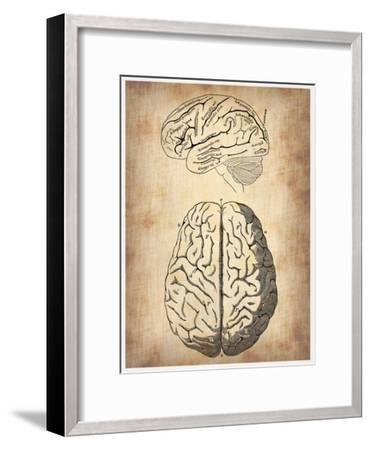 Vintage Brain Anatomy-NaxArt-Framed Art Print