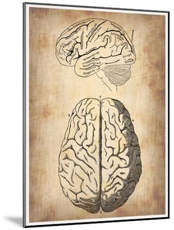 Vintage Brain Anatomy-NaxArt-Mounted Art Print