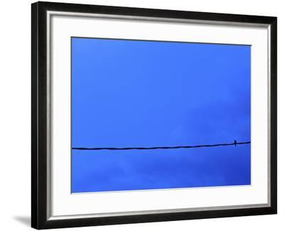 Dove on a Wire--Framed Photographic Print
