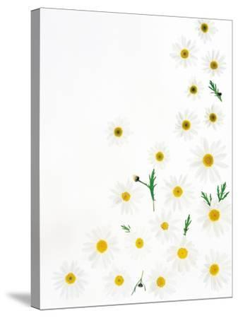 Floral Pattern on White Surface--Stretched Canvas Print