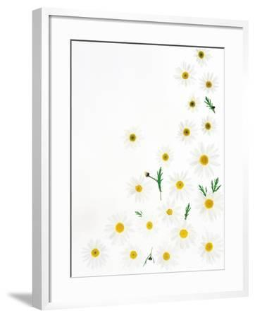Floral Pattern on White Surface--Framed Photographic Print