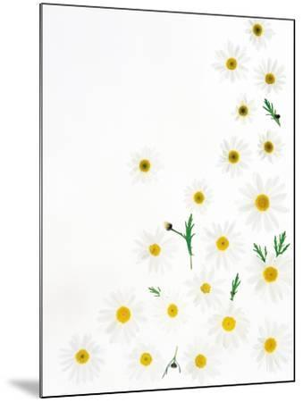 Floral Pattern on White Surface--Mounted Photographic Print