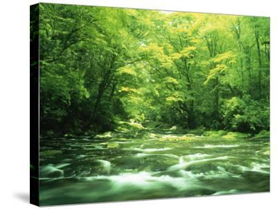 Stream Flowing Through a Forest--Stretched Canvas Print