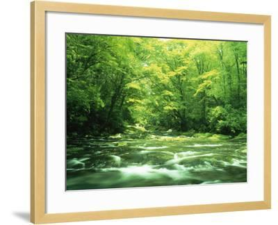 Stream Flowing Through a Forest--Framed Photographic Print