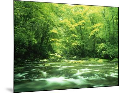 Stream Flowing Through a Forest--Mounted Photographic Print