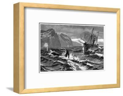 19th Century Whale Hunt-CCI Archives-Framed Giclee Print
