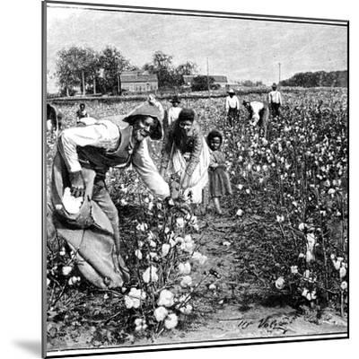 Cotton Industry, Early 20th Century-Science Photo Library-Mounted Giclee Print