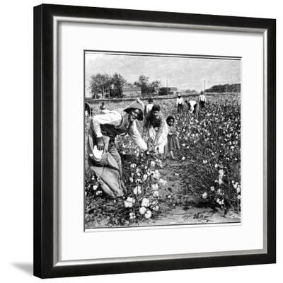 Cotton Industry, Early 20th Century-Science Photo Library-Framed Giclee Print