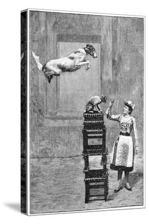 Trained Dogs, 19th Century-Science Photo Library-Stretched Canvas Print