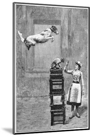 Trained Dogs, 19th Century-Science Photo Library-Mounted Giclee Print