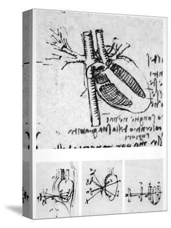 Heart Anatomy, 16th Century-Science Photo Library-Stretched Canvas Print