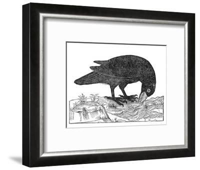 Crow, Historical Artwork-Middle Temple Library-Framed Giclee Print