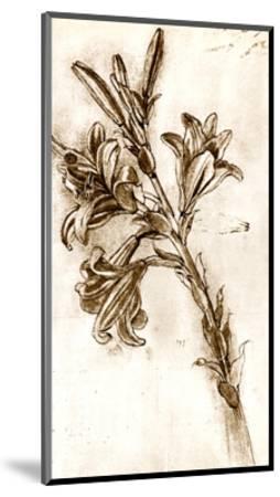 Leonardo Da Vinci's Lilies.-Sheila Terry-Mounted Giclee Print