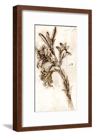 Leonardo Da Vinci's Lilies.-Sheila Terry-Framed Giclee Print