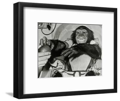 Chimp Ham After Mercury MR2 Flight--Framed Giclee Print