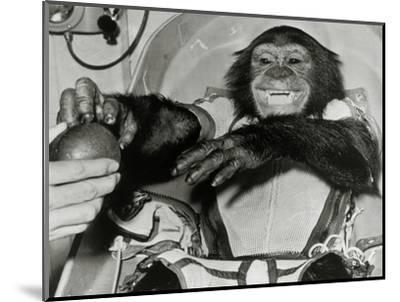 Chimp Ham After Mercury MR2 Flight--Mounted Giclee Print