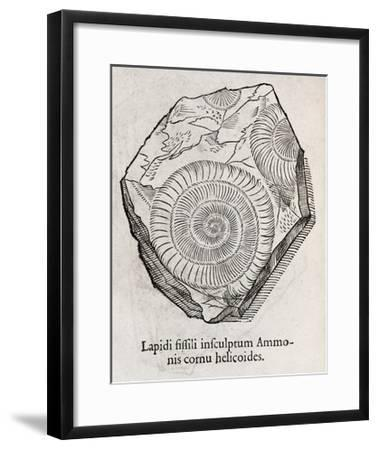 Ammonite Fossil, 16th Century-Middle Temple Library-Framed Giclee Print