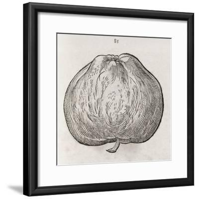 Apple, 16th Century-Middle Temple Library-Framed Giclee Print