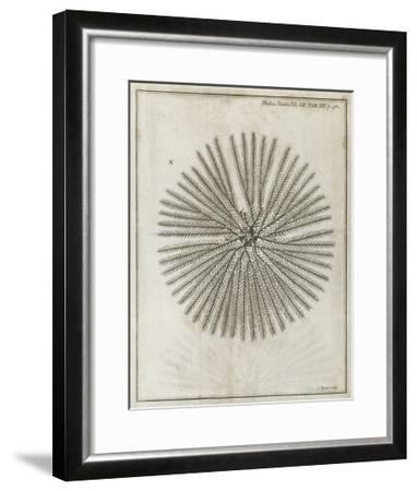 Echinoderm, 18th Century-Middle Temple Library-Framed Giclee Print