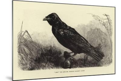 Grip, the Late Charles Dickens' Raven--Mounted Giclee Print