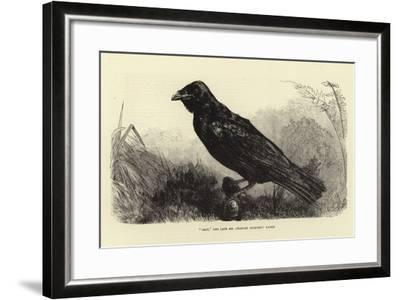 Grip, the Late Charles Dickens' Raven--Framed Giclee Print