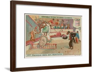 Circus of Monkeys--Framed Premium Giclee Print