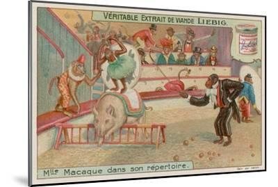 Circus of Monkeys--Mounted Premium Giclee Print