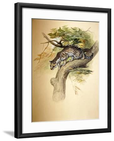 Ocelot, 1851-Joseph Wolf-Framed Giclee Print