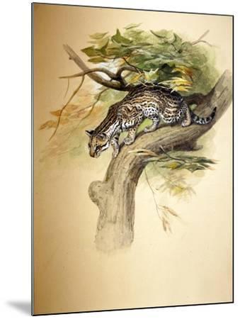 Ocelot, 1851-Joseph Wolf-Mounted Giclee Print