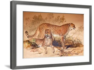 Cheetah, 1851-52-Joseph Wolf-Framed Giclee Print