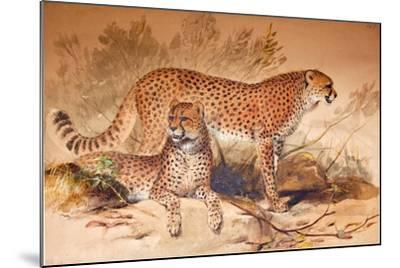 Cheetah, 1851-52-Joseph Wolf-Mounted Giclee Print