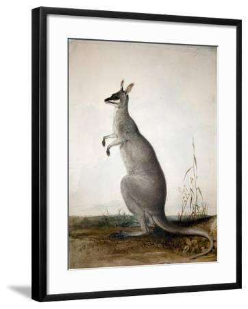 Macropus Parryi, 1834-Edward Lear-Framed Giclee Print