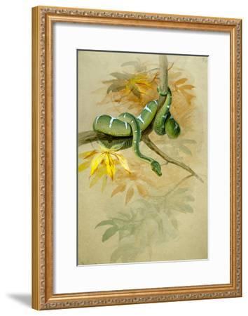 Green Boa-Joseph Wolf-Framed Giclee Print