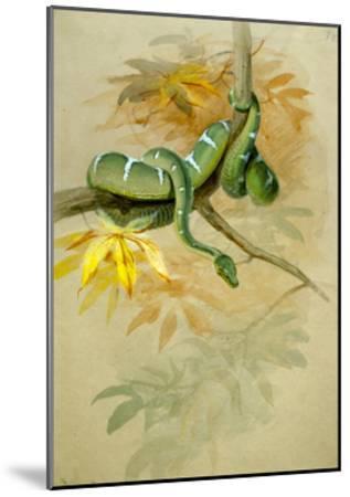 Green Boa-Joseph Wolf-Mounted Giclee Print