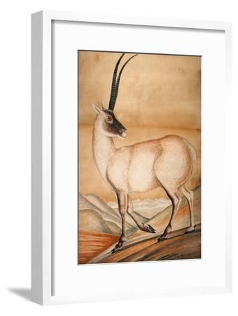 Chiru, 1840-Brian Houghton Hodgson-Framed Giclee Print