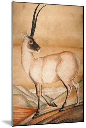 Chiru, 1840-Brian Houghton Hodgson-Mounted Giclee Print