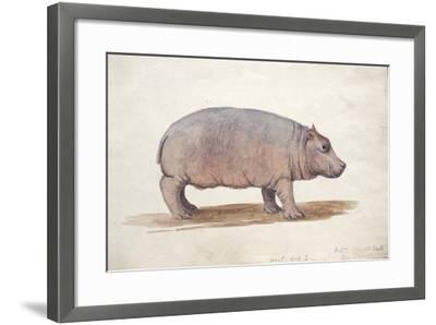 Obaysch, C.1850-Joseph Wolf-Framed Giclee Print