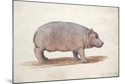 Obaysch, C.1850-Joseph Wolf-Mounted Giclee Print