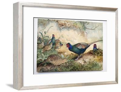 Japanese Pheasants, 1865-Joseph Wolf-Framed Giclee Print