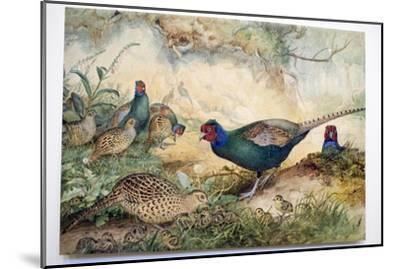 Japanese Pheasants, 1865-Joseph Wolf-Mounted Giclee Print