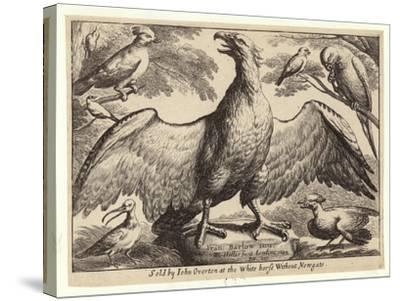 Eagle and Other Birds-Wenceslaus Hollar-Stretched Canvas Print