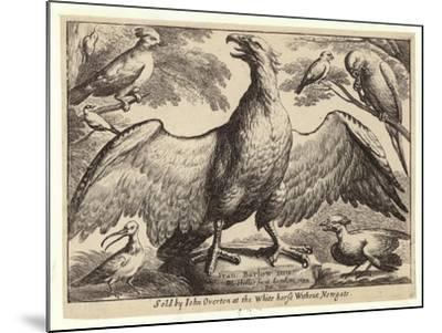 Eagle and Other Birds-Wenceslaus Hollar-Mounted Giclee Print