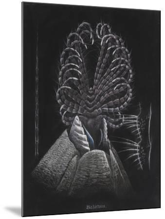 Barnacle-Philip Henry Gosse-Mounted Giclee Print