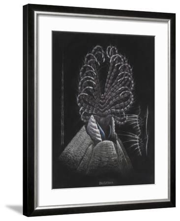 Barnacle-Philip Henry Gosse-Framed Giclee Print