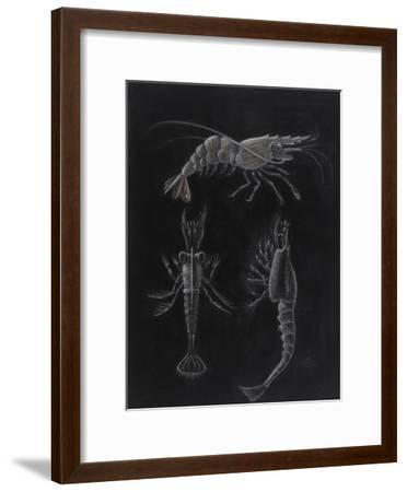 Crustacea-Philip Henry Gosse-Framed Giclee Print