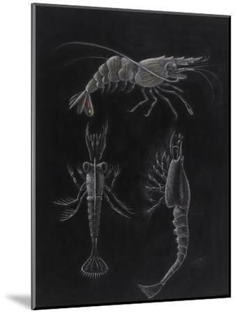 Crustacea-Philip Henry Gosse-Mounted Giclee Print
