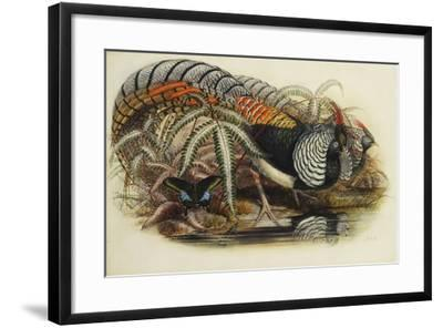 Lady Amherst's Pheasant-Henry Constantine Richter-Framed Giclee Print